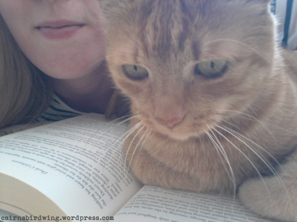 Spot beim Lesen